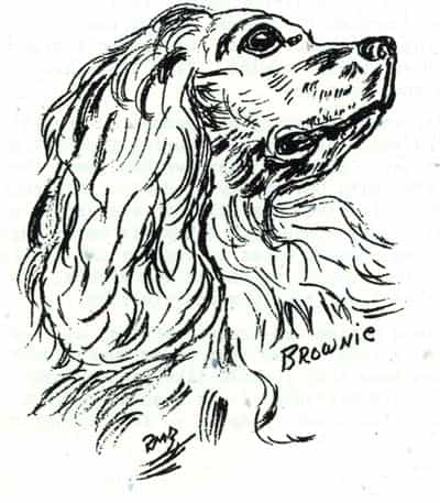 Dog Named Brownie - Illustration by Rosella Brewster